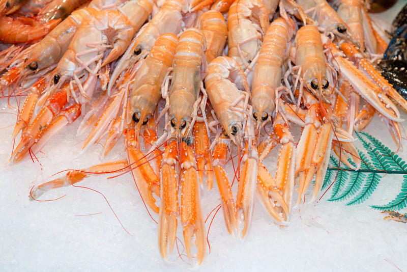 Nephrops norvegicus royalty free stock photography
