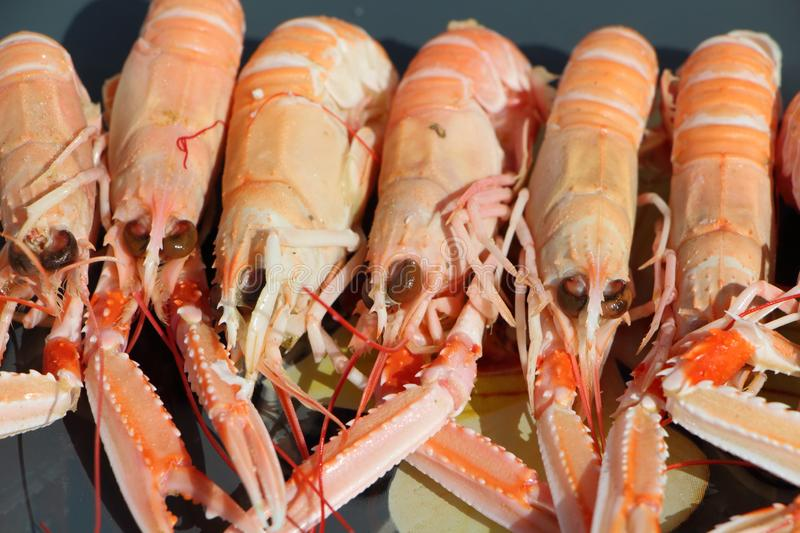 Nephrops on a plate royalty free stock image