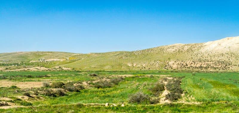 Neqev沙漠在早期的春天,以色列 库存图片