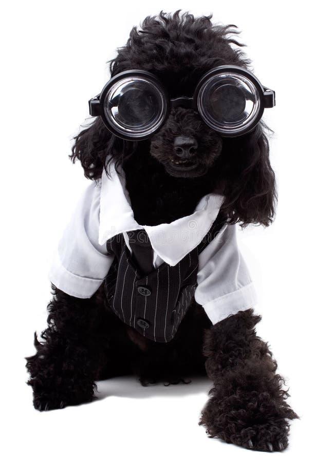 Nerd Dog royalty free stock photo