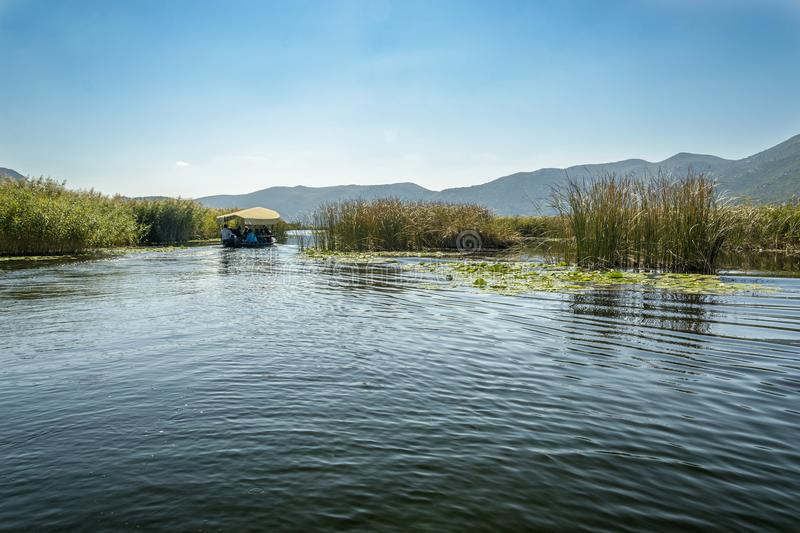 Neretva river. Boat in the neretva river between Wild Lily and reeds in Croatia royalty free stock image