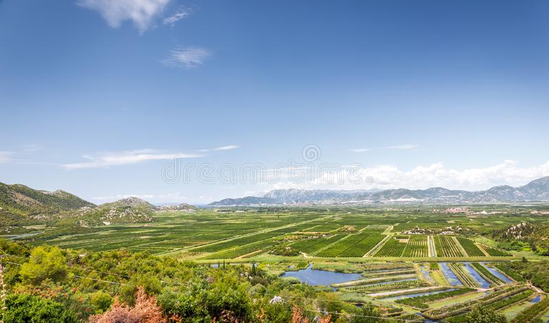 Neretva river delta in Croatia. Green agricultural terrains in delta of Neretva river in Croatia royalty free stock images