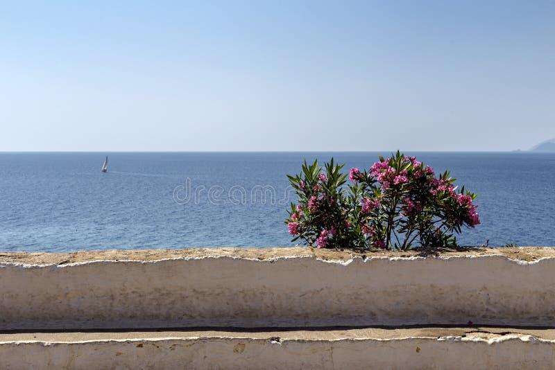 Neriumoleander im Hintergrund des Meeres stockbilder
