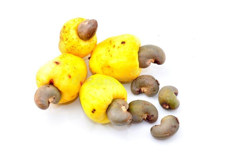 Nerkodrzew owoc fotografia stock