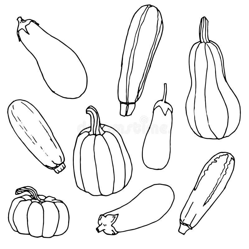 Nero e mentre schizzo, insieme di varie verdure zucchini, melanzana, zucca - illustrazione disegnata a mano illustrazione vettoriale