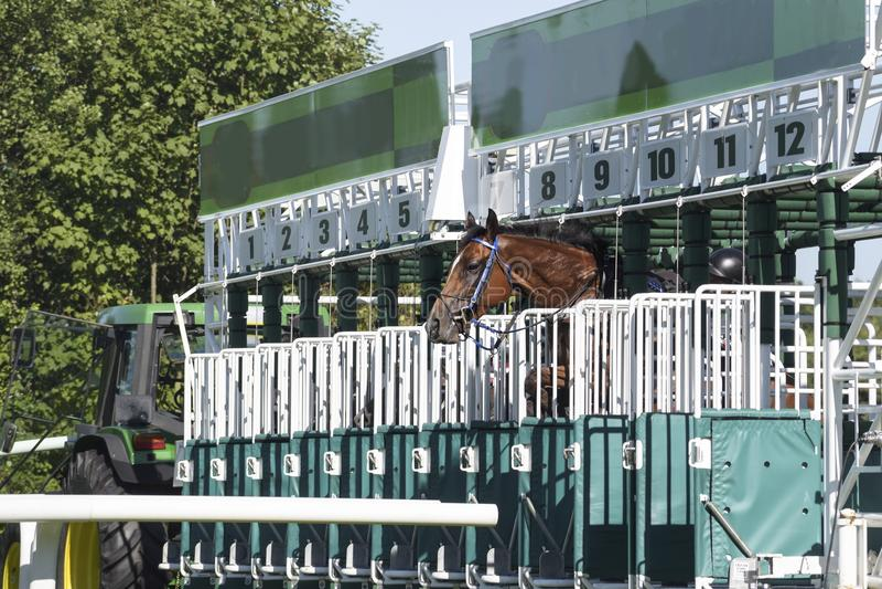 Nervöses Pferd versucht, von der Startmaschine vor herauszuspringen stockbild