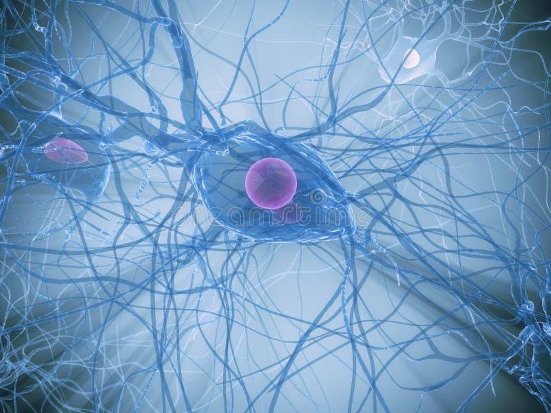 Download Nerve cell stock illustration. Image of biology, organism - 7725973