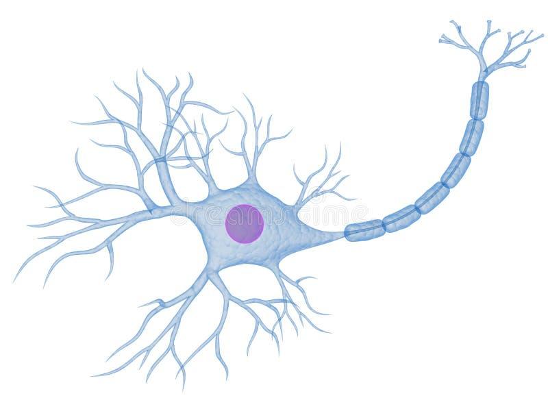 Nervenzelle stock abbildung. Illustration von render, karosserie ...