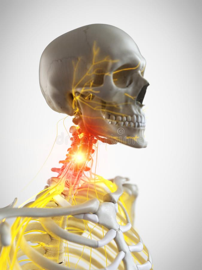The nerves of the neck royalty free illustration