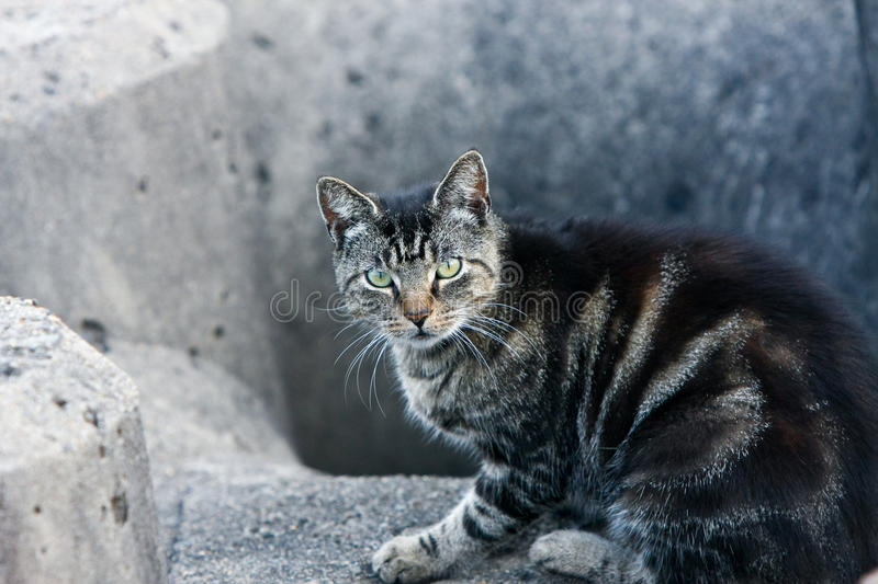Download Nervous Stray Cat Watching The Camera Stock Photo - Image: 18918746