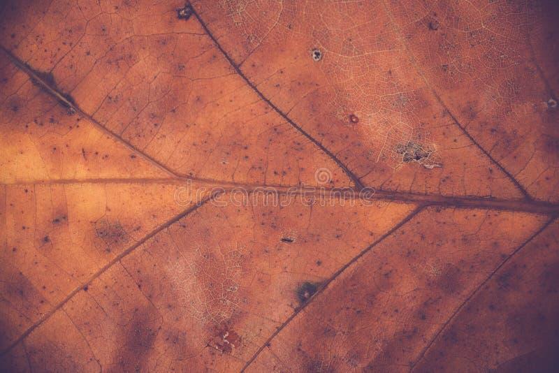 Nervures de feuille de chêne photos stock