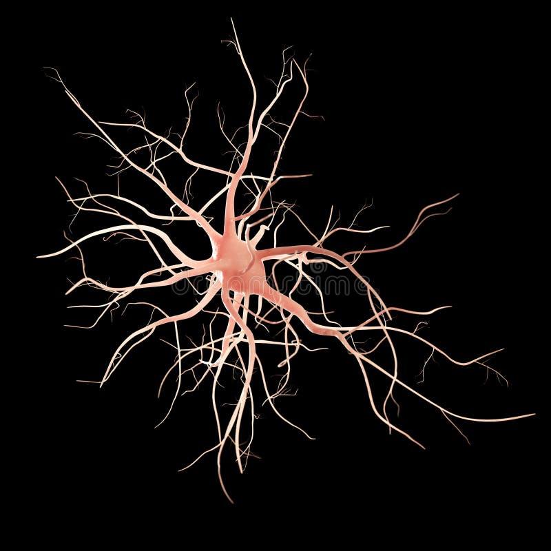 Nerw komórka ilustracji
