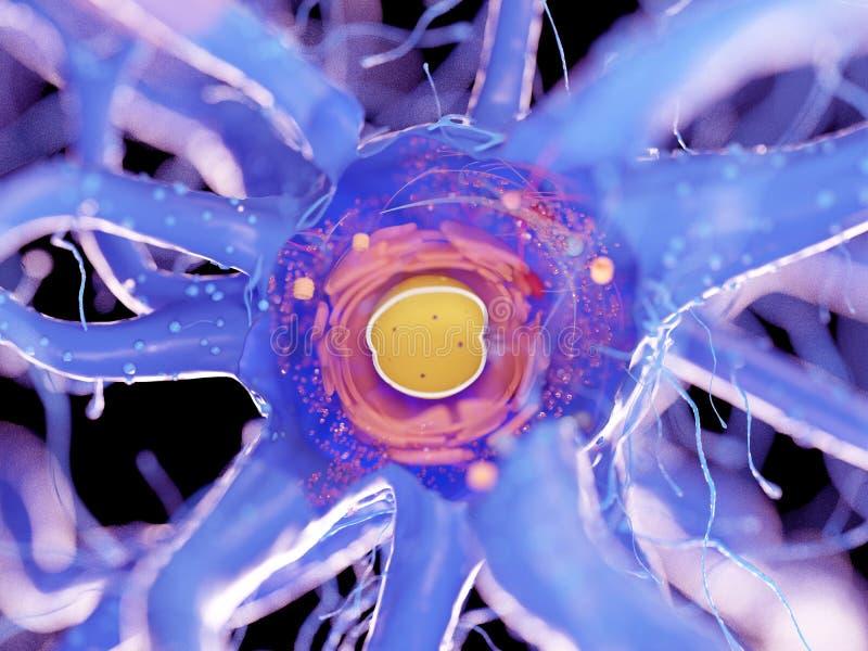 Nerw komórki przekrój poprzeczny ilustracji