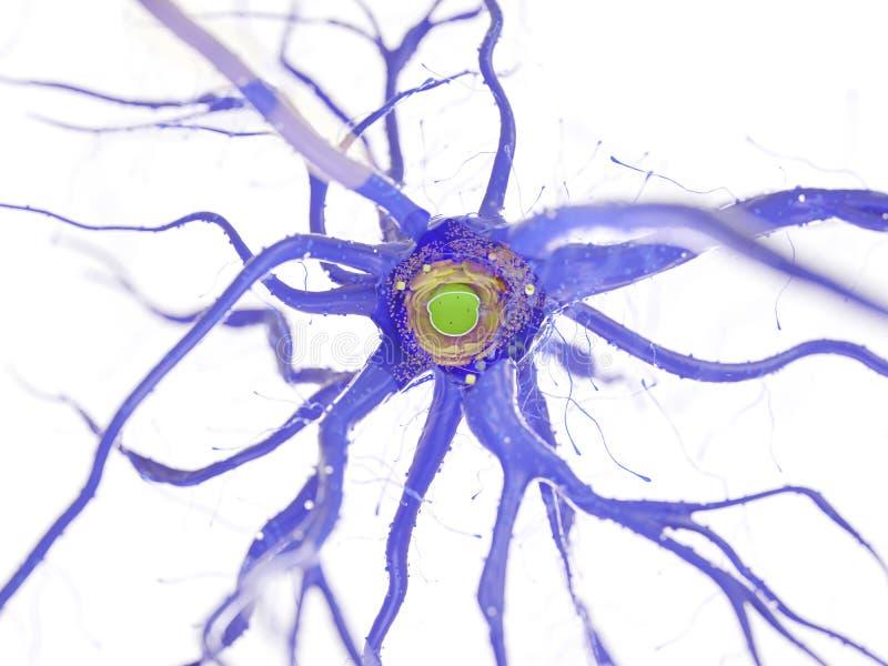 Nerw komórki przekrój poprzeczny ilustracja wektor