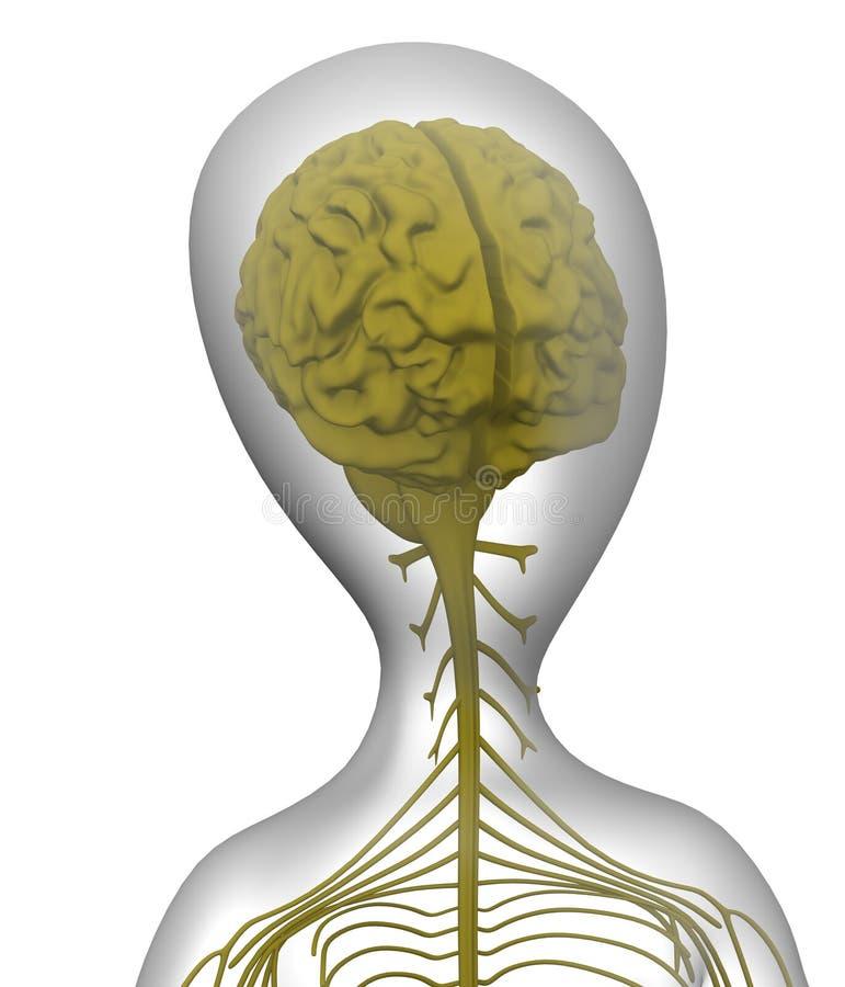 nerwowy ilustracji