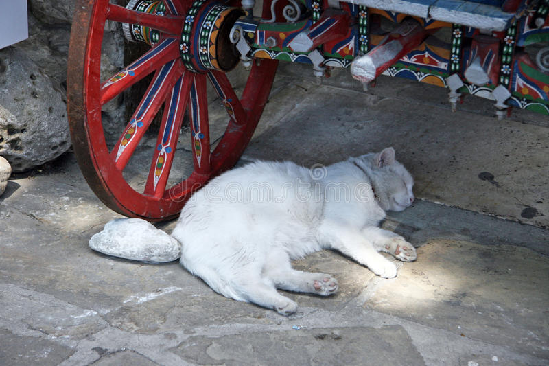 Nessebar. White cat on holiday under the old coach stock photography