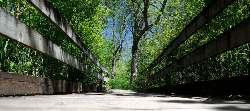 Nessuna gente sul ponte di traccia dell'airone in Marymoor, Redmond, Washingto fotografie stock libere da diritti
