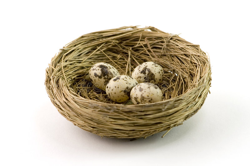Download Nest stock photo. Image of eggs, bird, live, feathers - 1717010