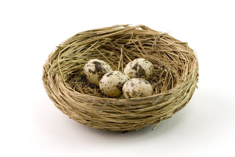 Nest stockfoto