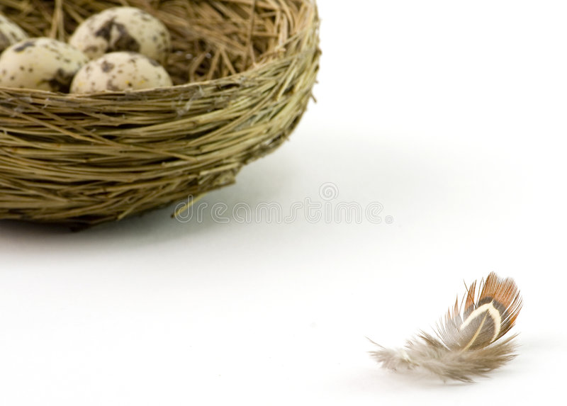 Download Nest and stock photo. Image of growth, color, nest, basket - 1717048