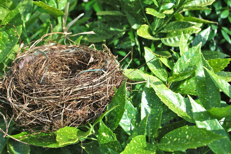 The nest royalty free stock photos