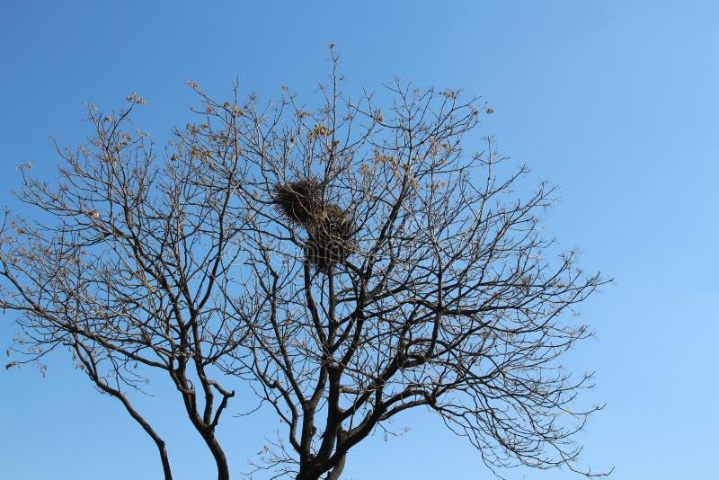 nest stockfotos