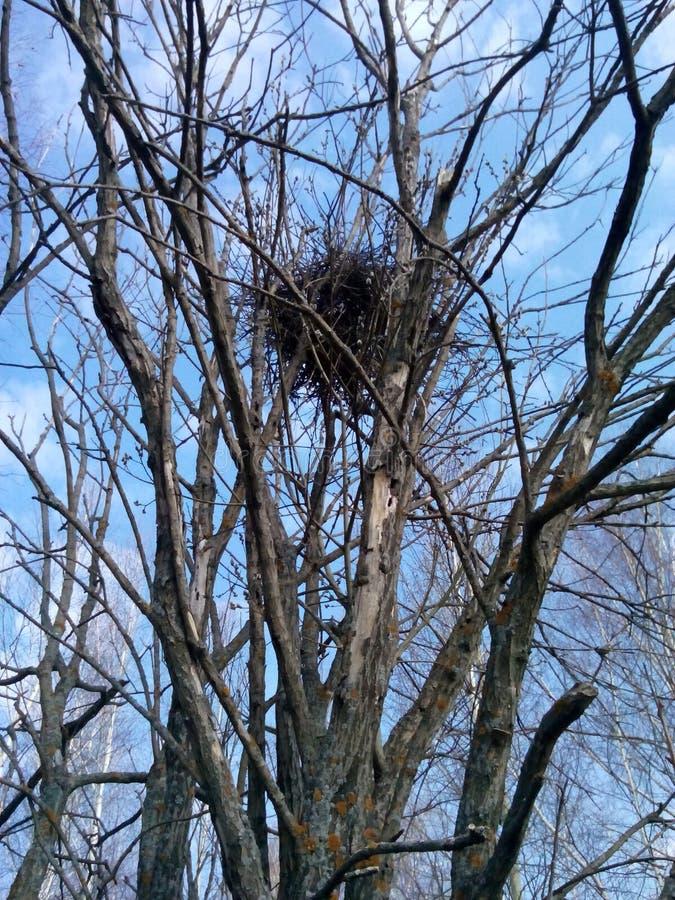 nest stock afbeelding
