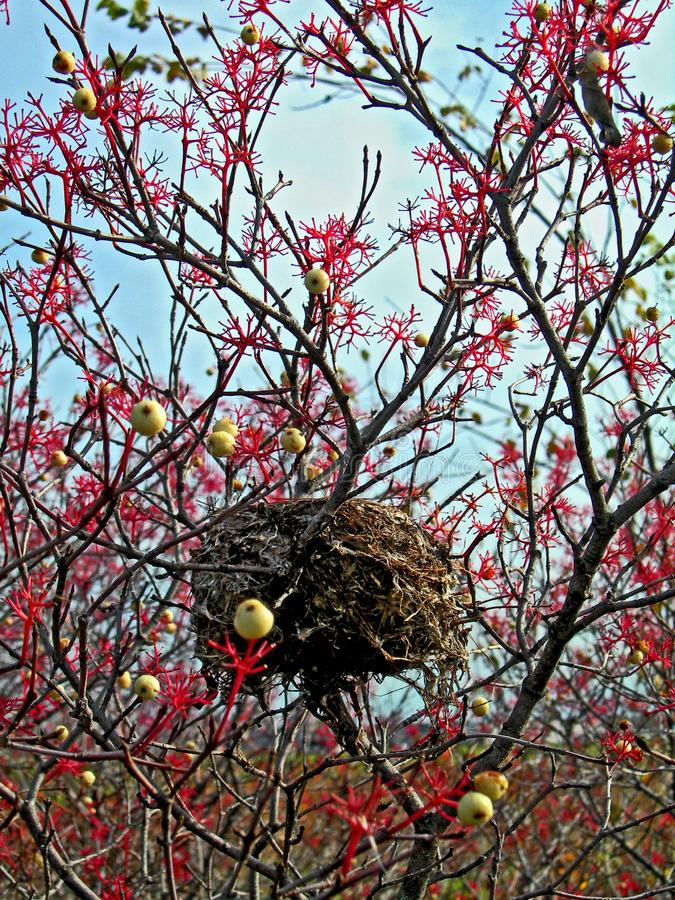 Nest and Berries stock photos
