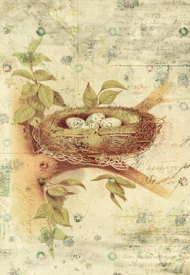 Nest and Bird Eggs Botanical Vintage Style Wall Art with Textured Background. Shabby style