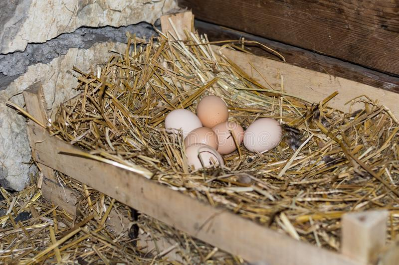 nest of the chicken eggs royalty free stock images