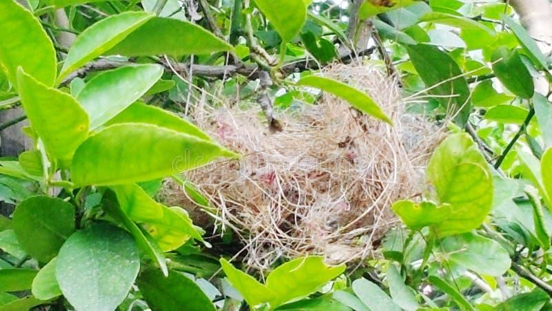Nest des Vogels stockfotografie