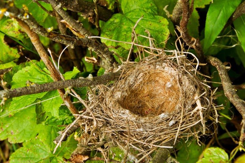 Nest des Vogels in einem Baum stockfoto