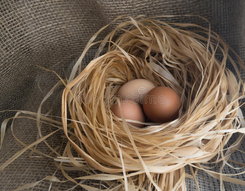 Download Nest Of Dry Grass And Three Brown Chicken Eggs Stock Image - Image of food, chicken: 87729763