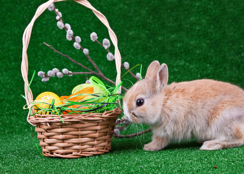 Nest with easter eggs and rabbit stock photography