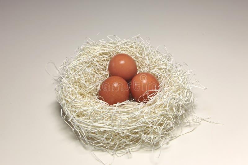 Download Nest Egg stock photo. Image of create, calmness, easter - 14522888