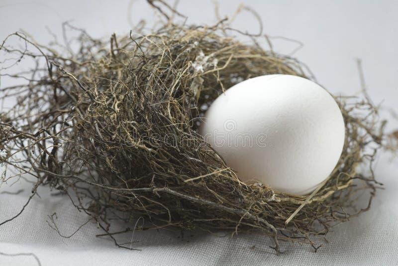 nest egg royalty free stock images