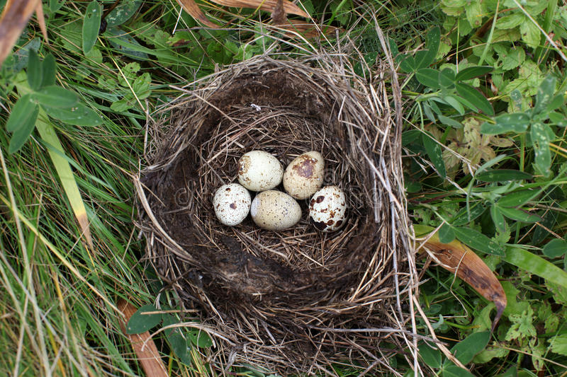 Nest with egg of wild bird outdoors. The Nest with egg of wild bird outdoors stock photography