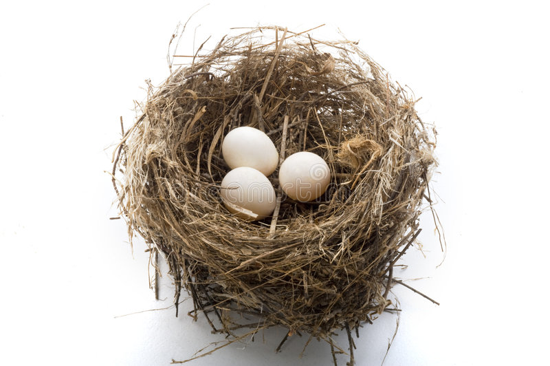Nest and eggs. Bird's nest with three eggs isolated on white
