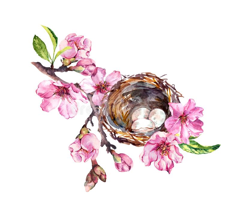 Nest with eggs on cherry blossom branch, sakura flowers in spring time. Watercolor twig vector illustration
