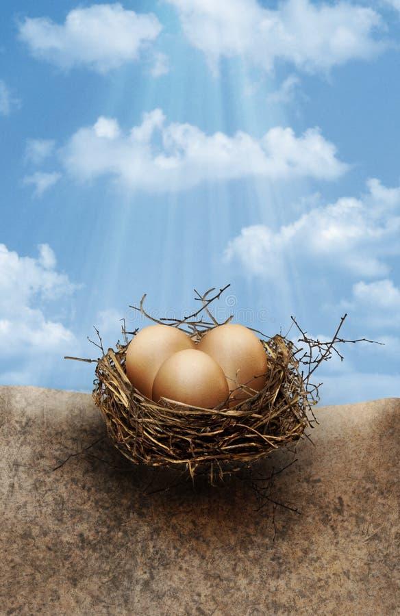 Nest eggs stock images
