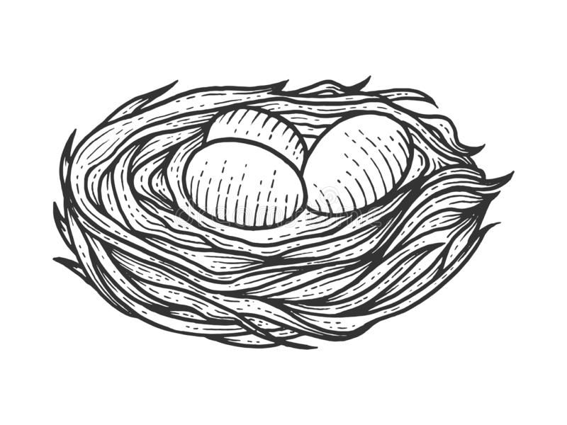 Nest with eggs sketch engraving vector stock illustration