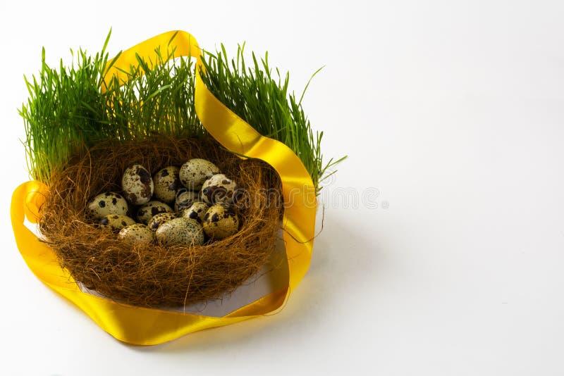 Nest with eggs of the wild bird stock photo