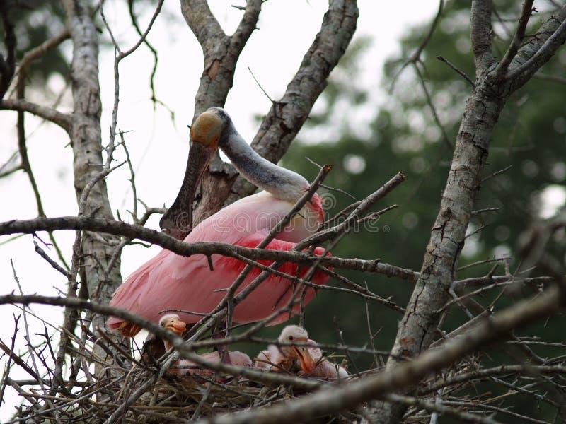 Nest eines Mutter stockfoto