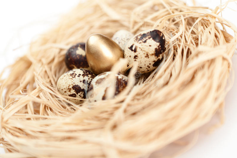 Nest with golden and natural quail eggs, flower shaped. Isolated on white royalty free stock photos
