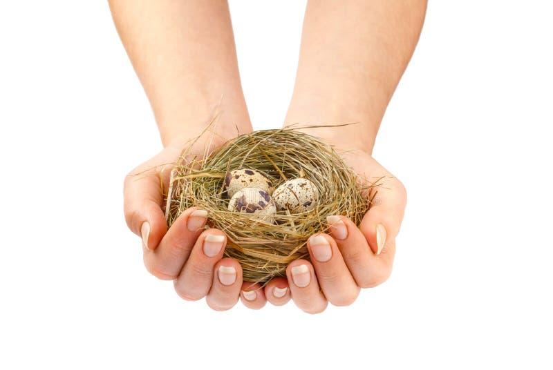 Nest in handen royalty-vrije stock afbeeldingen
