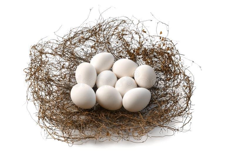 Nest mit den Eiern des Vogels stockfoto