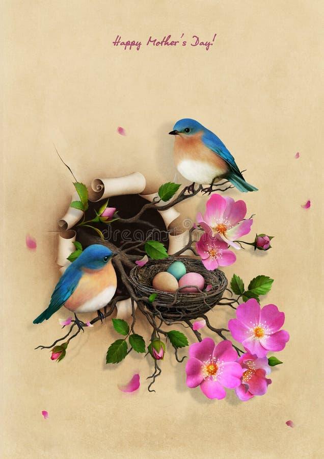 Nest mit zwei blauen Vögeln lizenzfreie abbildung