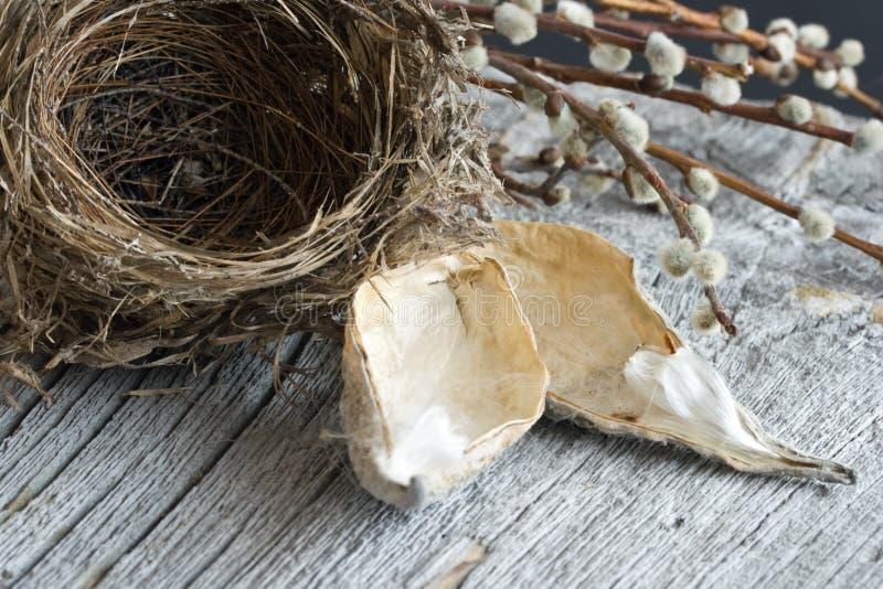 Nest-noch Leben des Vogels stockfotografie
