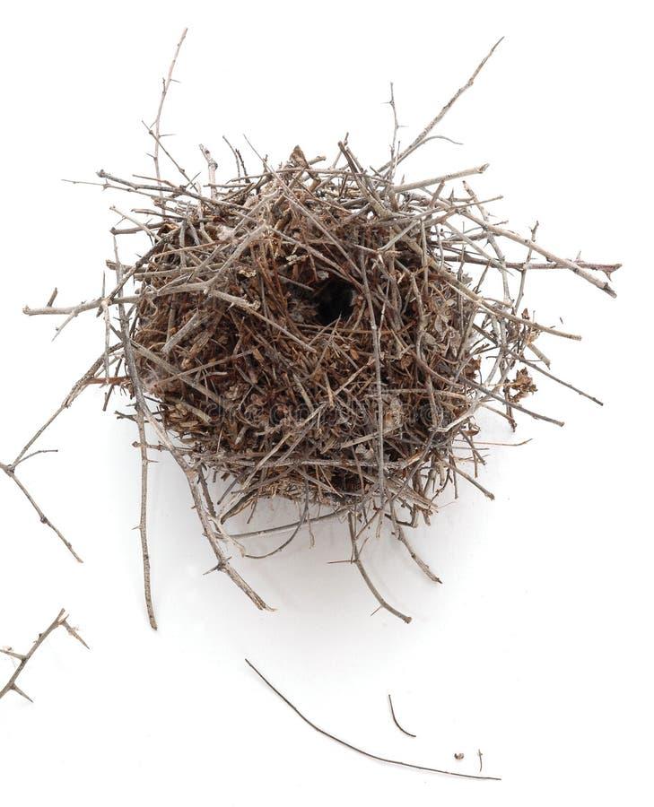 Free Nest On White Background  Royalty Free Stock Images - 281269