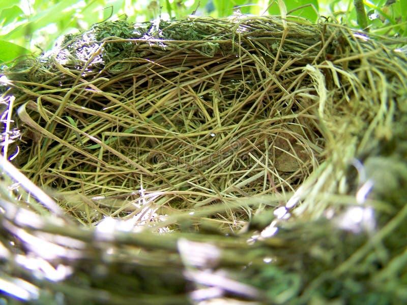 Nest op de boom stock foto's